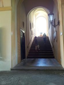 Museo palazzo muses