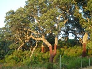 Notice-board trees